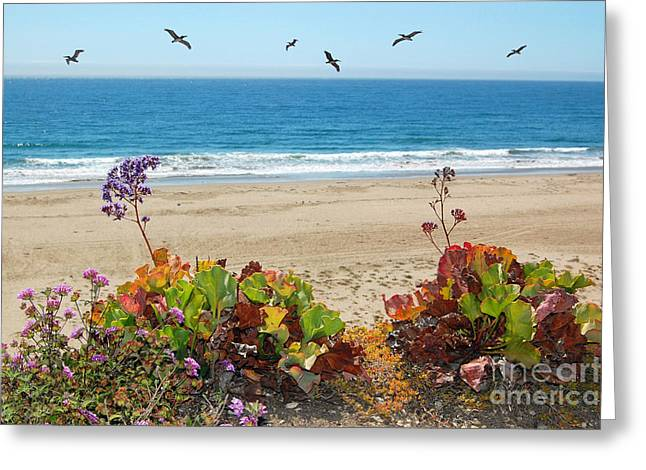 Pelicans And Flowers On Pismo Beach Greeting Card