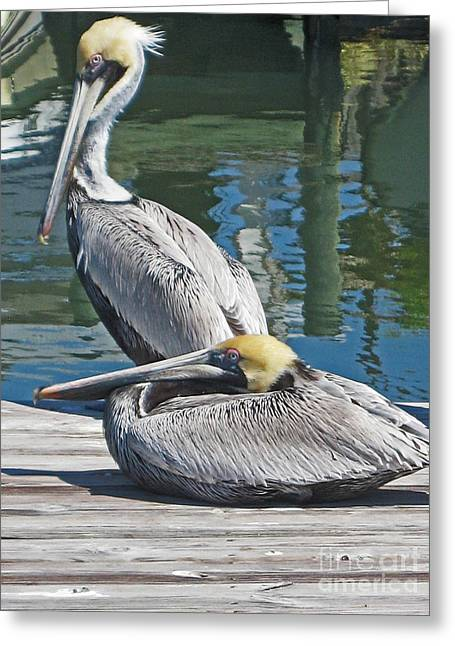 Pelicans At Rest Greeting Card by Joan McArthur
