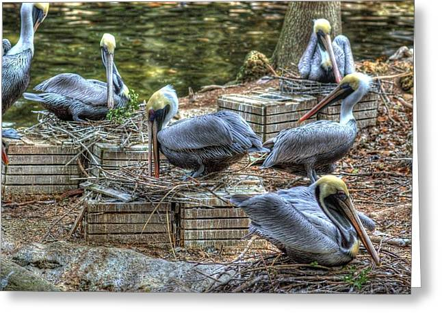 Pelicans By The Dock Greeting Card