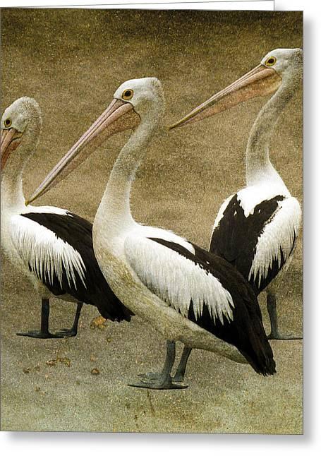 Pelicans Greeting Card by Daniel Hagerman