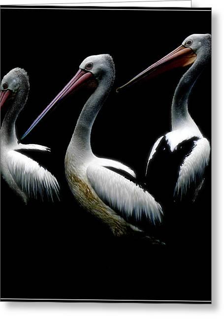 Pelicans Dark Greeting Card by Daniel Hagerman