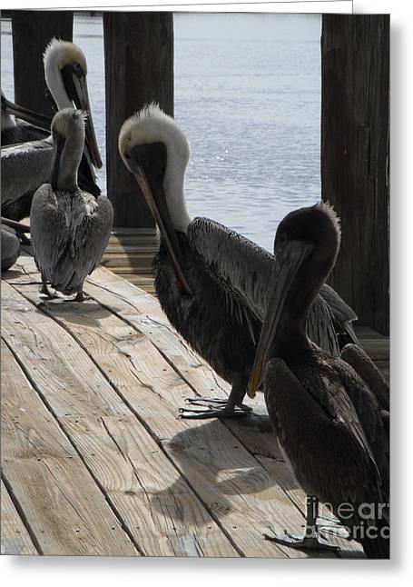 Pelicans Dockside Greeting Card