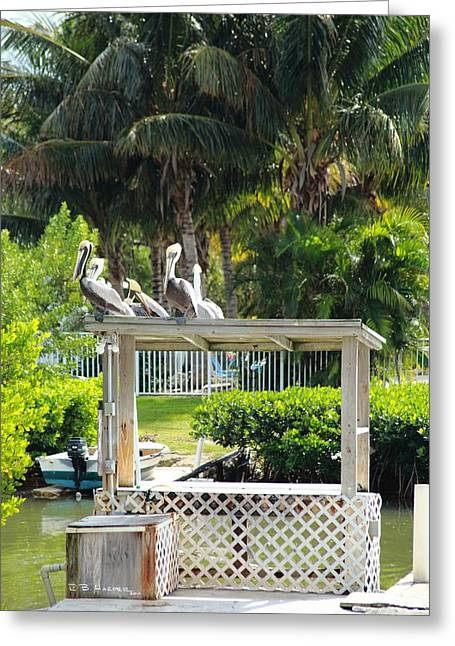 Greeting Card featuring the photograph Pelicans' Fish Prep Station by R B Harper