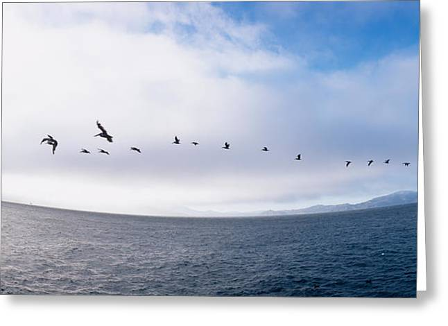 Pelicans Flying Over The Sea, Alcatraz Greeting Card