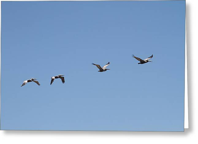 Pelicans In A Row 6 Greeting Card by Cathy Lindsey