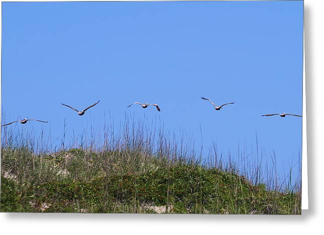 Pelicans In A Row 8 Greeting Card by Cathy Lindsey