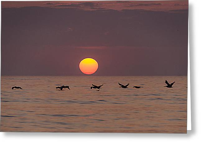 Pelicans In A Row Greeting Card by  Island Sunrise and Sunsets Pieter Jordaan