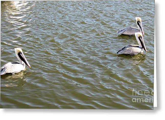 Greeting Card featuring the photograph Pelicans In Florida by Oksana Semenchenko