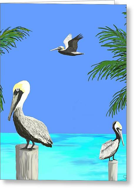 Pelicans In Meditation Greeting Card by Amy Scholten