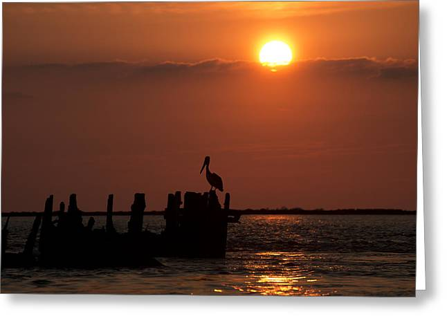 Pelicans In Silhouette In Texas Greeting Card by Ray Devlin