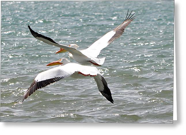 Pelicans In Sync Greeting Card