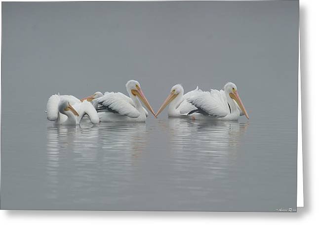 Pelicans In The Mist Greeting Card