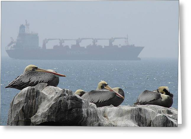 Greeting Card featuring the photograph Pelicans In The Mist by Ramona Johnston