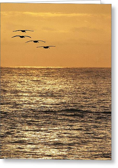 Greeting Card featuring the photograph Pelicans Ocean And Sunsetting by Tom Janca