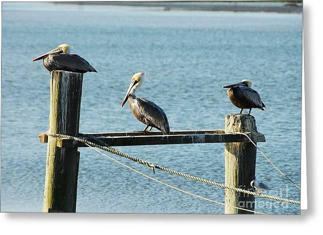 Pelicans On A Break Greeting Card by Mel Steinhauer