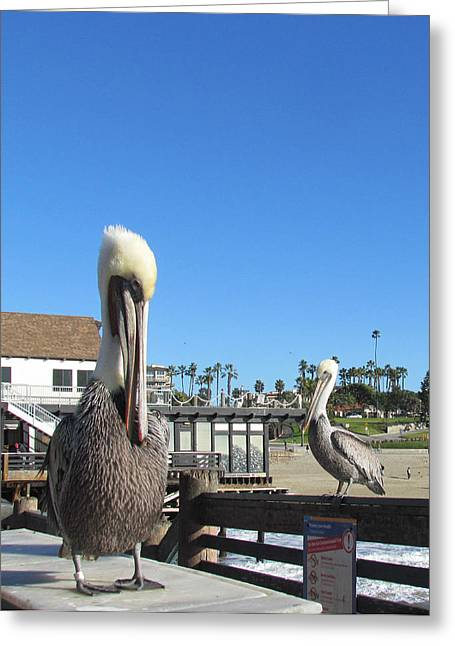 Pelicans On Pier Greeting Card