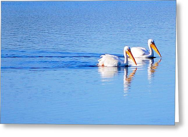 Pelicans On The Bay Greeting Card