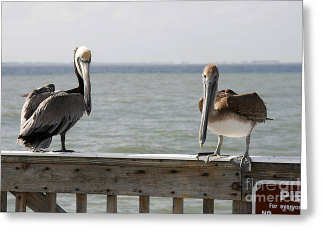 Pelicans On The Pier At Fort Myers Beach In Florida Greeting Card
