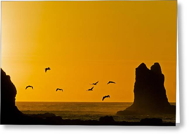 Pelicans On The Wing II Greeting Card