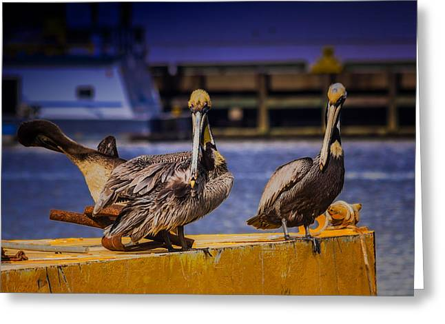 Pelican's Roost Greeting Card by Barry Jones