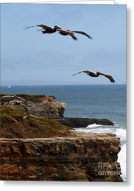 Greeting Card featuring the photograph Pelicans by Theresa Ramos-DuVon