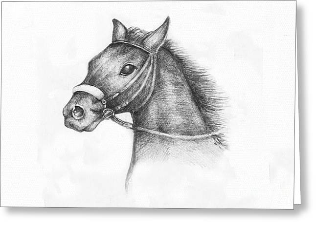 Pencil Drawing Of A Horse Greeting Card by Kiril Stanchev