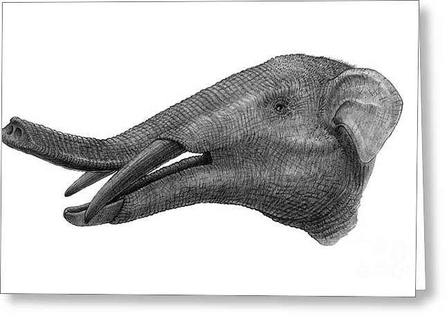 Pencil Drawing Of Gomphotherium Greeting Card by Vladimir Nikolov