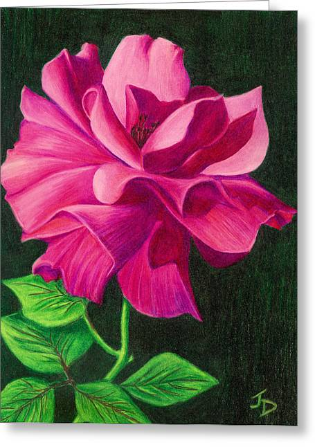 Pencil Rose Greeting Card by Janice Dunbar