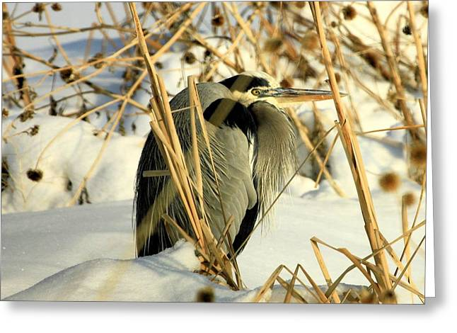 Penguin Heron  Greeting Card