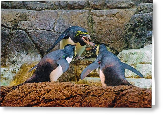Penguin Talk Greeting Card by Cheryl Cencich