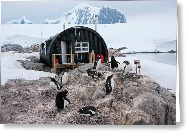 Penguins At Port Lockroy Greeting Card
