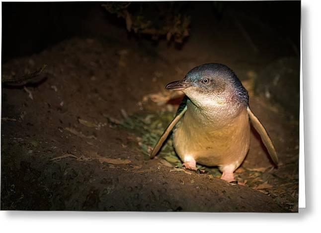 Penguins Greeting Card by George Lim