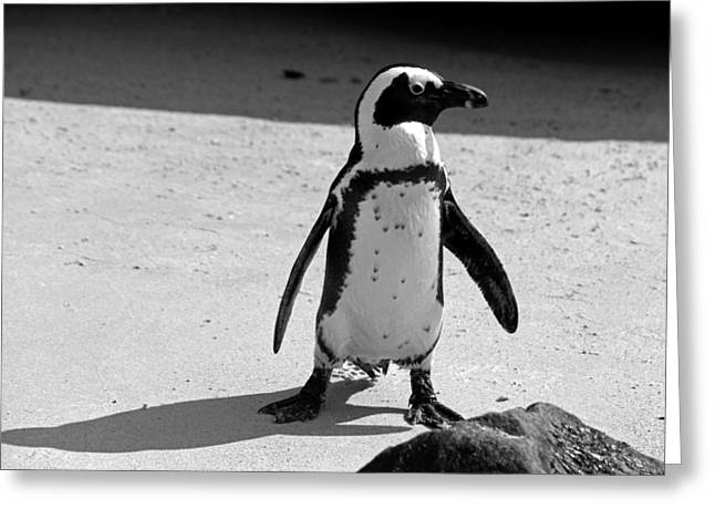 Penguins On A Beach Greeting Card by Chris Whittle