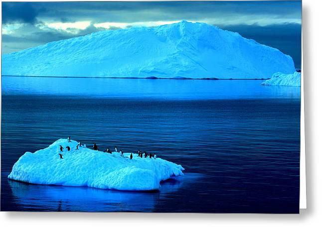 Penguins On Iceberg Greeting Card