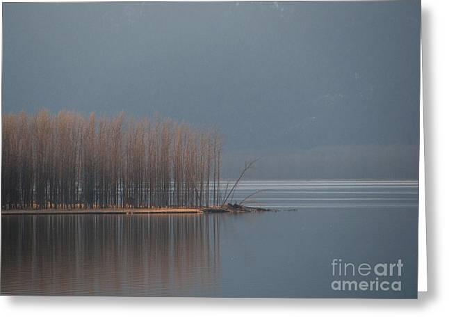 Peninsula Of Trees Greeting Card by Leone Lund