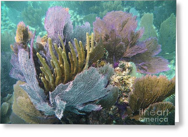 Pennekamp Bouquet Greeting Card by Adam Jewell