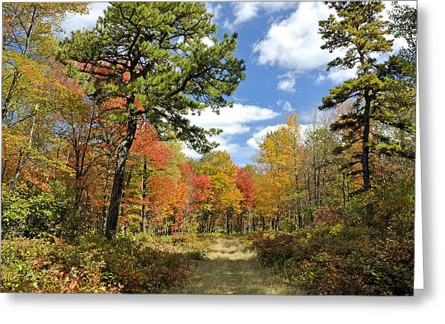 Pennsylvania Forest In Autumn Pocono Mountains Greeting Card by A Gurmankin