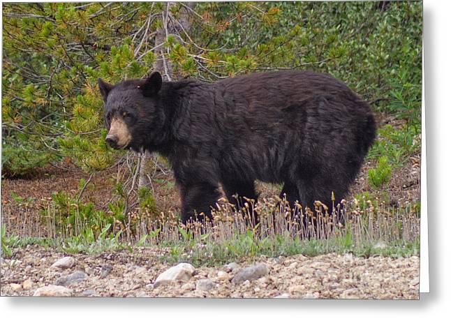Pensive Black Bear Greeting Card