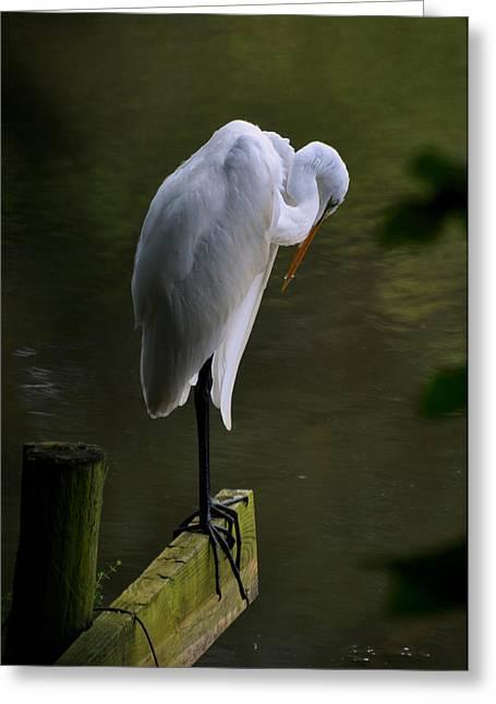 Pensive Egret - C3101c Greeting Card