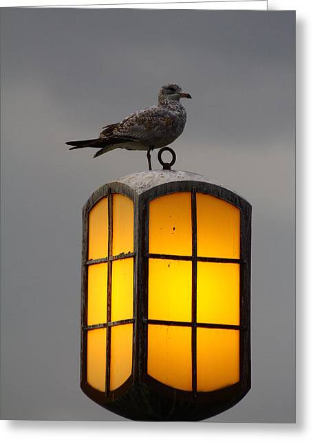 Pensive Gull Greeting Card by Rexford L Powell