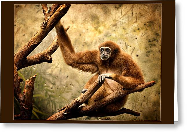 Pensive Primate Greeting Card by Kerri Garrison