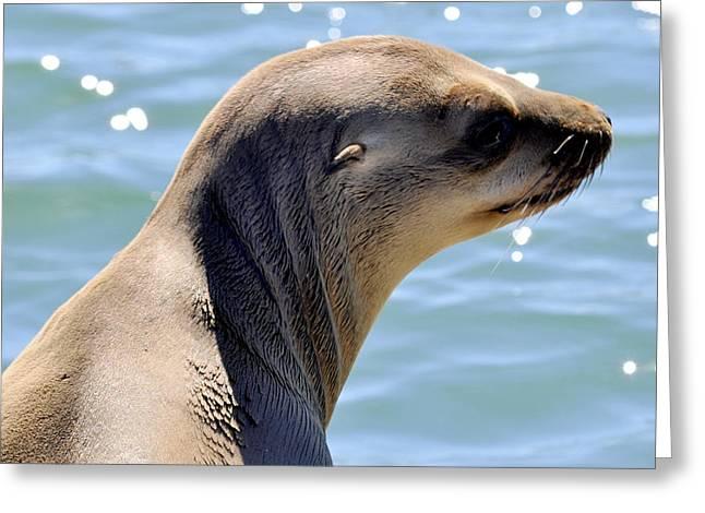 Pensive Sea Lion  Greeting Card