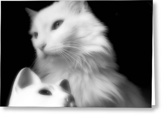 Greeting Card featuring the photograph Pensive Turkish Angora by Aurelio Zucco