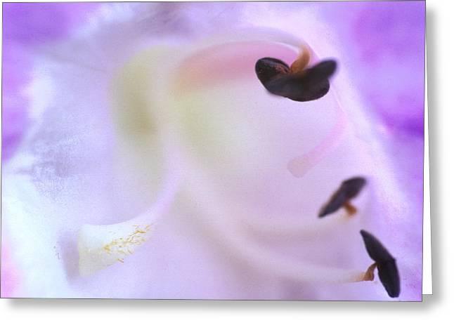 Penstemon - Beard Tongue Greeting Card by Carl Perkins