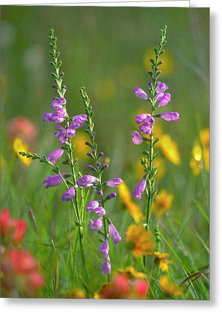 Penstemon In A Field Of Other Greeting Card