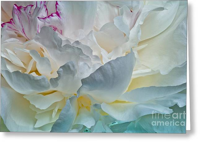 Peonie 2012 Greeting Card by Art Barker