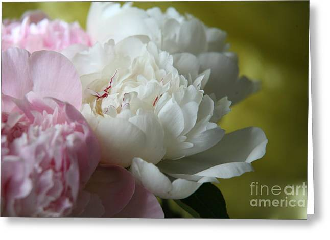 Peonies Greeting Card by Lynn England