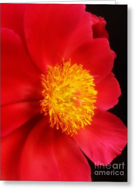 Peony 2 Greeting Card by Heather L Wright