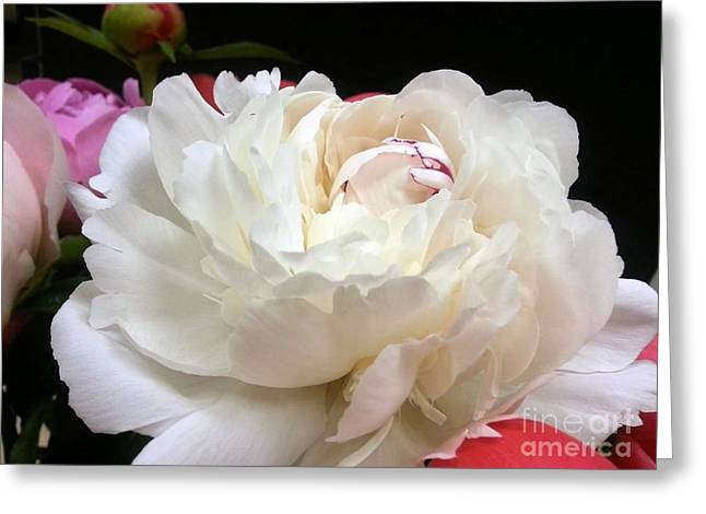 Peony Addiction Greeting Card by Heather L Wright