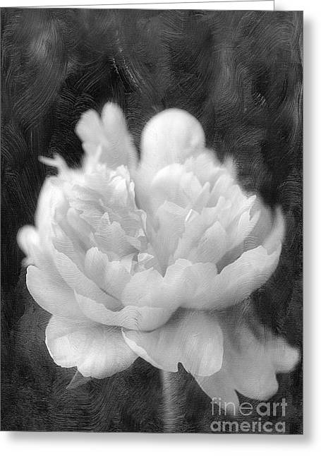 Peony  Black And White Greeting Card by Darren Fisher